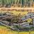 elhagyatott · ház · mező · vidéki · Észak-Dakota · tér - stock fotó © lameeks