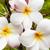 pembe · çiçekler · güzel · nadir · çiçek · doğa - stok fotoğraf © lameeks