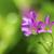 黄色 · 紫色 · 画像 · 太陽 · 白 - ストックフォト © lameeks