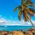 cocotier · arbre · voilier · plage · tropicale - photo stock © lameeks