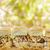 kip · dressing · zoete · voedsel · witte · boord - stockfoto © LAMeeks