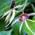 twee · Geel · orchidee · bloemen · geïsoleerd · witte - stockfoto © lameeks
