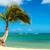 palmboom · blauwe · hemel · witte · wolken · vakantie · natuur - stockfoto © lameeks