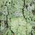 biały · kory · mech · brzozowy · tekstury · drzewo - zdjęcia stock © lameeks