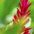 花 · 自然 · 環境 · 葉 · ハワイ · 米国 - ストックフォト © lameeks
