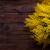 ág · fűzfa · bolyhos · fényes · citromsárga · copy · space - stock fotó © lana_m