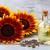 ayçiçek · yağı · plastik · şişeler · sıcak · güneşli · ayçiçeği - stok fotoğraf © lana_m