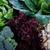 maduro · hortalizas · alimentos · blanco · alimentación · saludable - foto stock © lana_m