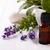 lawendy · kwiaty · świeże · wyschnięcia · suszy · biały - zdjęcia stock © lana_m