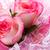 csinos · rózsaszín · rózsák · menyasszonyi · virágcsokor · szelektív · fókusz - stock fotó © lana_m