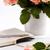 flor-de-rosa · livro · velho · livro · branco · flor - foto stock © lana_m