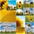 girasoles · girasol · blanco · frontera · nubes · marco - foto stock © ldambies