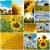 подсолнухи · коллаж · несколько · красочный · подсолнечника · фотографий - Сток-фото © ldambies