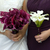 novia · boda · púrpura · mujer · manos · primavera - foto stock © leeavison