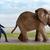 om · elefant · top · deal · uite · orizont - imagine de stoc © leeavison