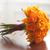 оранжевый · роз · цветок · цветы · свадьба - Сток-фото © leeavison