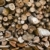 dąb · tekstury · drzewo · drewna · tle - zdjęcia stock © leedsn