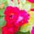 bee · honingbij · honing · bloem · voorjaar - stockfoto © len44ik