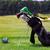 verde · golf · cart · vuota · campo · da · golf - foto d'archivio © len44ik
