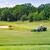 mükemmel · dalgalı · zemin · yeşil · ot · golf · alan - stok fotoğraf © len44ik