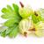 gooseberries with leaves on white background stock photo © len44ik