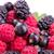 fresh berries raspberries blackcurrants mulberries stock photo © len44ik