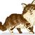 Мэн · кошки · смайлик · рисунок · Cartoon · современных - Сток-фото © lenm