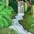 熱帯 · 森林 · 風景 · 緑 · 木 · 葉 - ストックフォト © lenm