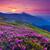 montanha · paisagem · magia · rosa · flores · verão - foto stock © Leonidtit