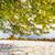 luxuriante · vert · belle · parc · jardin · soleil - photo stock © leonidtit