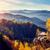majestic colorful forest stock photo © leonidtit