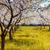 pommier · floraison · verger · de · pommiers · printemps · Ukraine · Europe - photo stock © Leonidtit