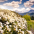 nyár · tájkép · virágzó · hegy · völgy · Grúzia - stock fotó © leonidtit