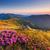 美しい · 日の出 · 山 · 花 · 夏の花 · 午前 - ストックフォト © leonidtit