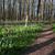 prímula · floresta · paisagem · beleza · natureza · primavera - foto stock © leonidtit