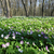 prímula · flor · primavera · primavera - foto stock © leonidtit