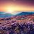 romántica · rosa · distante · montana · nubes · puesta · de · sol - foto stock © leonidtit