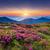 çiçekler · yaz · dağ · pembe · Ukrayna - stok fotoğraf © leonidtit