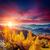 warm · zonsondergang · zonlicht · najaar · bos · licht - stockfoto © leonidtit