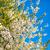 flower stock photo © leonidtit