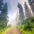 forest stock photo © leonidtit