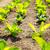 салата · области · пейзаж · зеленый · Салат · сельского · хозяйства - Сток-фото © leungchopan