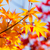 Color changing maple leave in autumn stock photo © leungchopan