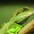 camaleão · Sri · Lanka · bebê · fundo · cor - foto stock © leungchopan