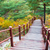 wooden steps in forest stock photo © leungchopan
