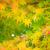 Autumn maple leaves  stock photo © leungchopan