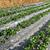 сарай · фермы · области · лет · глубокий · Blue · Sky - Сток-фото © leungchopan