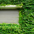 green ivy leaves wall with metal roller shutter stock photo © leungchopan