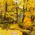 Autumn jungle stock photo © leungchopan