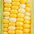 corn close up stock photo © leungchopan